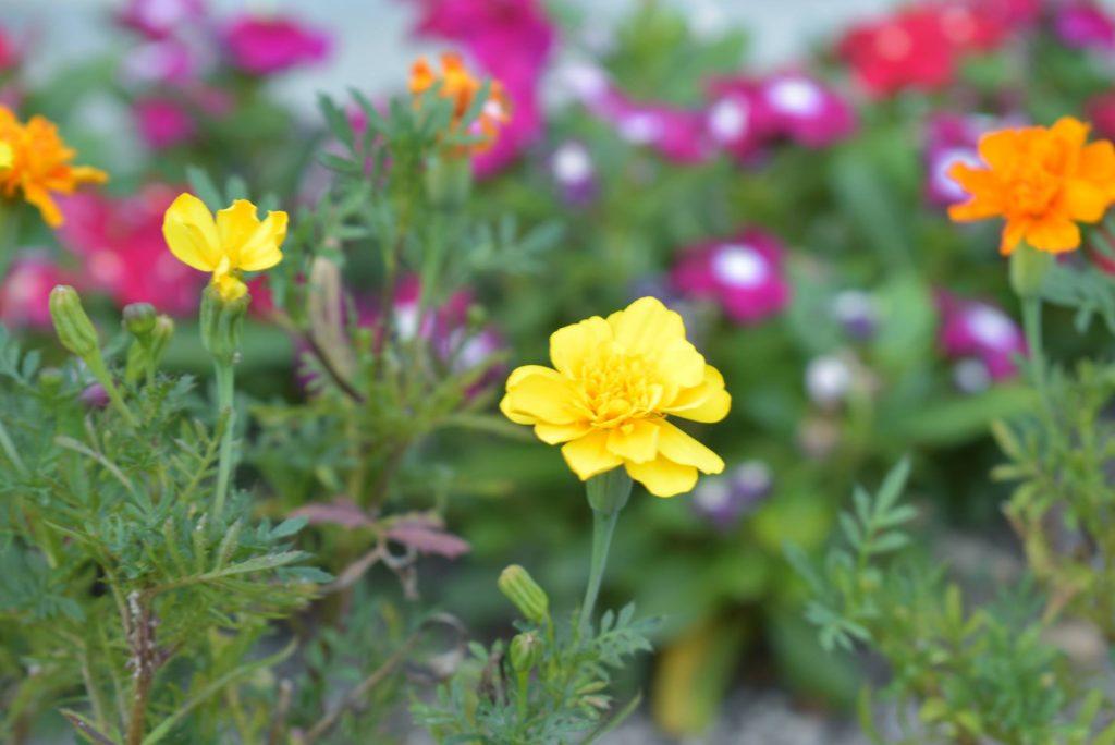 d5600の花の写真